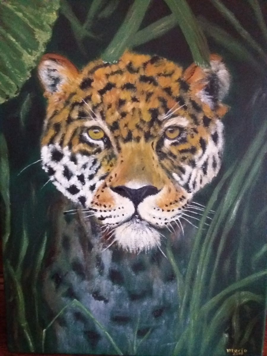 jaguar, 30 bij 40 cm