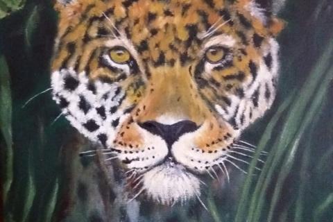 jaguar, 30 bij 40 m
