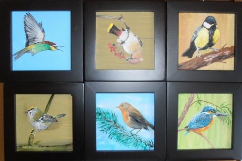 6x zangvogel